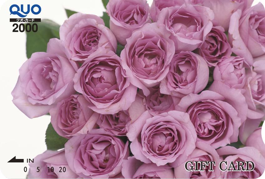 ピンクのバラ (ST020004)